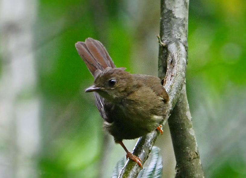 birding-in-kibale-forest-park