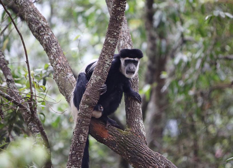 primates-bwindi-uganda