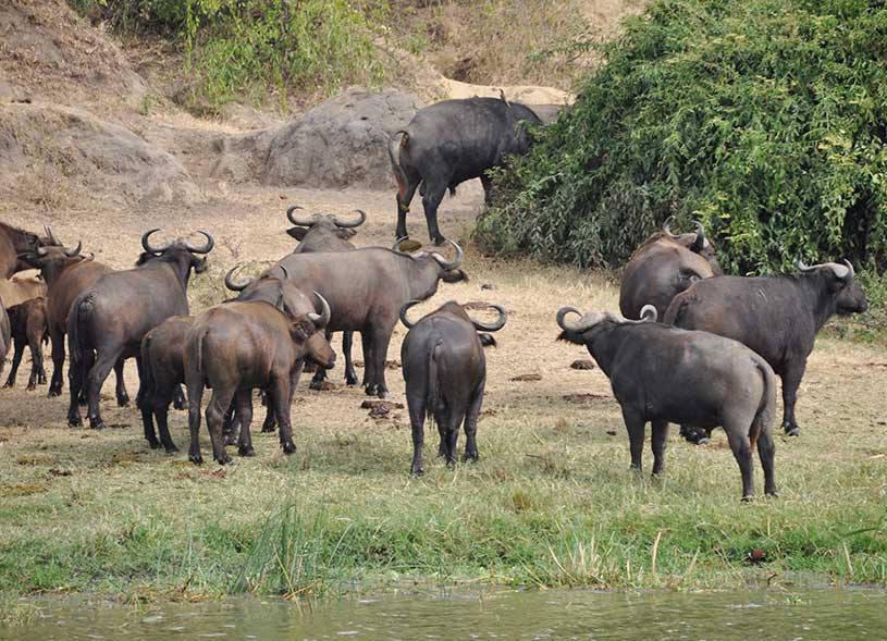 queen-elizabeth-national-park-wildlife-uganda