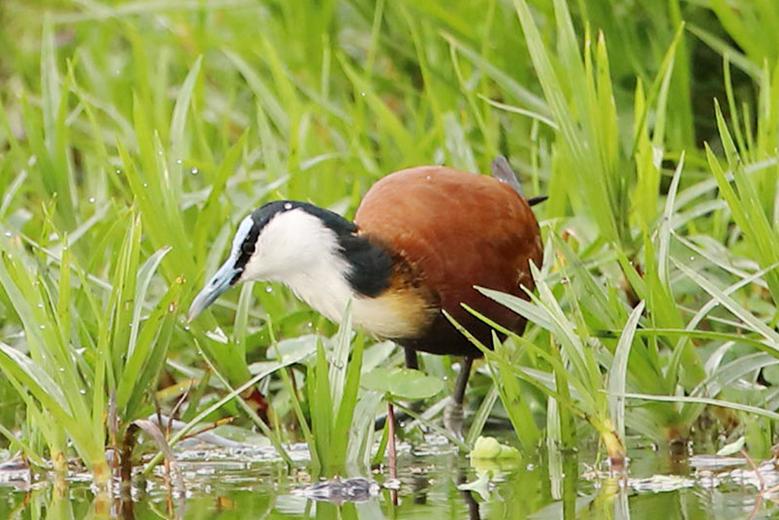 birds-east-africa-uganda