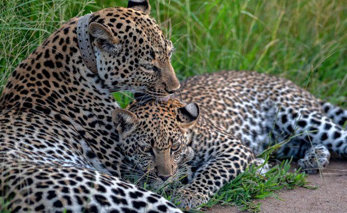 magic-uganda-wildlife-game-safari